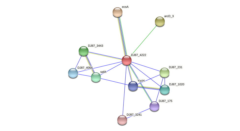 DJ87_4222 protein (Bacillus cereus) - STRING interaction network