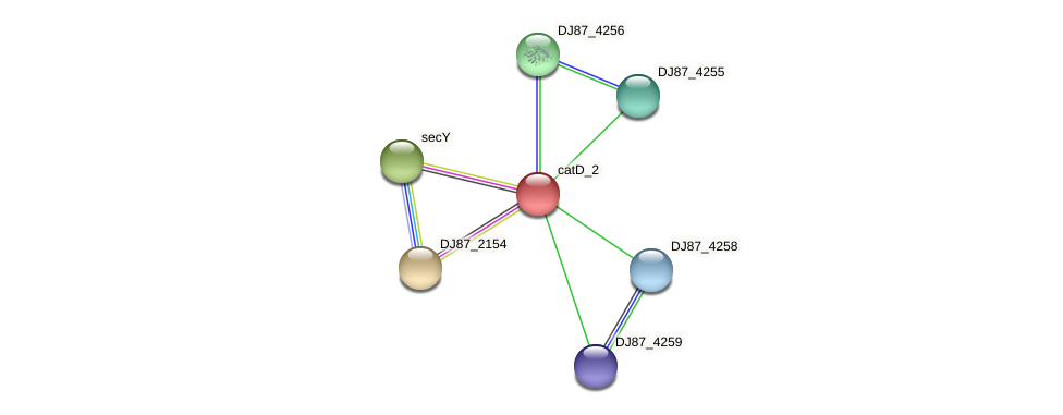 catD_2 protein (Bacillus cereus) - STRING interaction network
