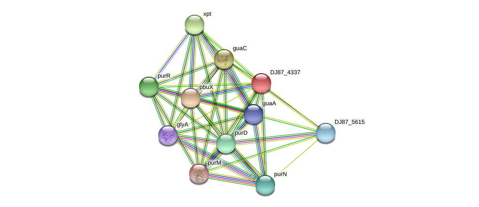 pbuO_2 protein (Bacillus cereus) - STRING interaction network