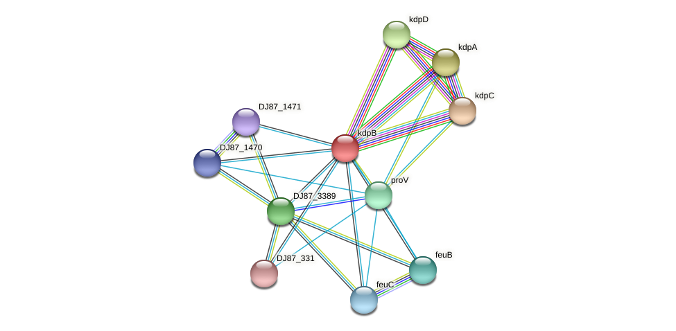 kdpB protein (Bacillus cereus) - STRING interaction network