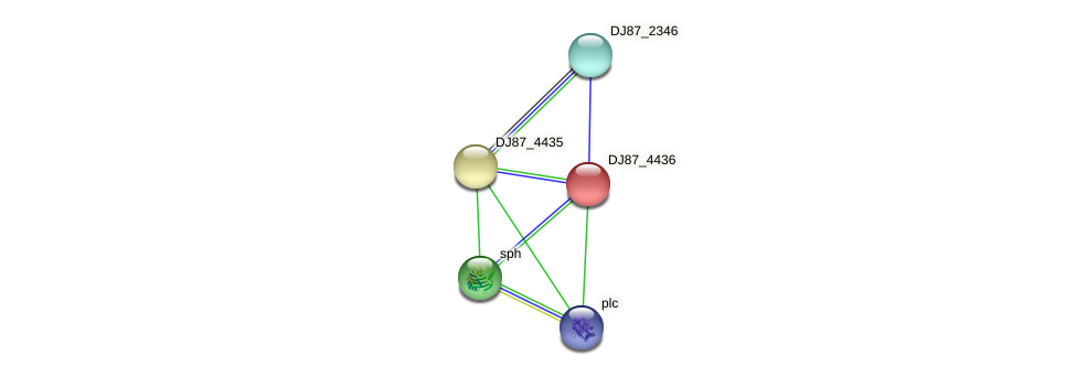 DJ87_4436 protein (Bacillus cereus) - STRING interaction network