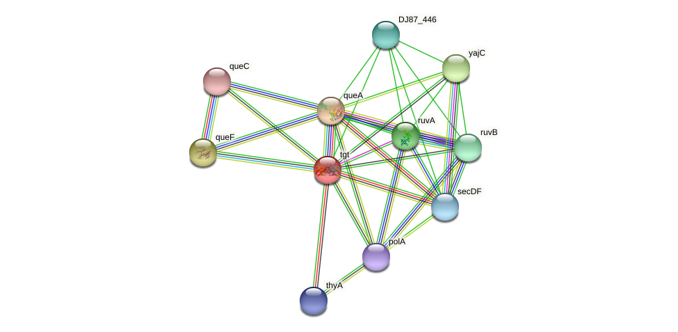 tgt protein (Bacillus cereus) - STRING interaction network