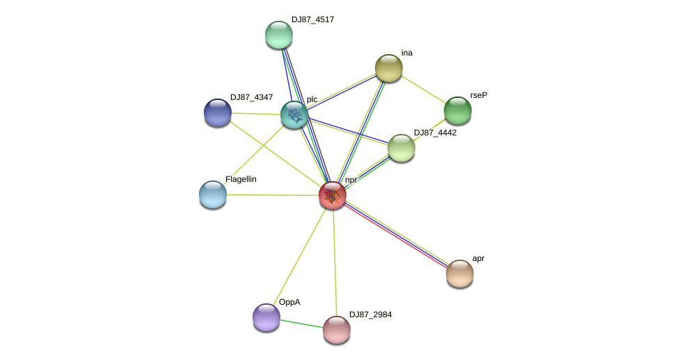npr protein (Bacillus cereus) - STRING interaction network