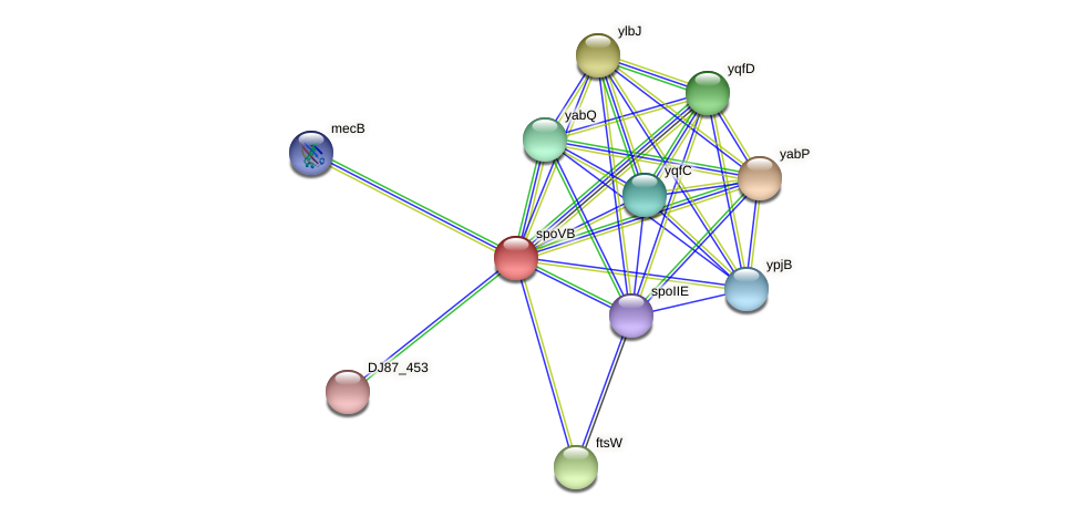 spoVB protein (Bacillus cereus) - STRING interaction network