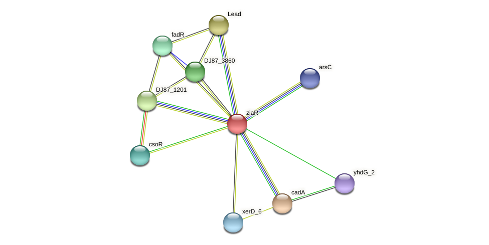 ziaR_1 protein (Bacillus cereus) - STRING interaction network