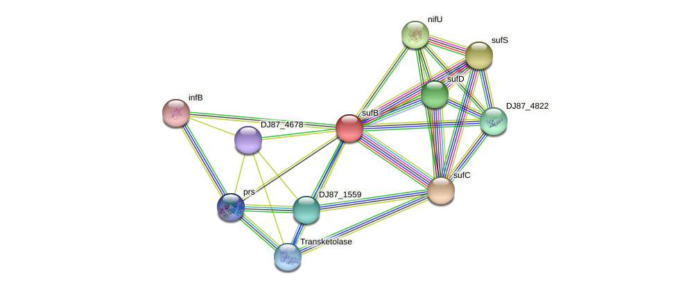 sufB protein (Bacillus cereus) - STRING interaction network