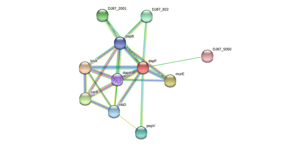 dapF protein (Bacillus cereus) - STRING interaction network
