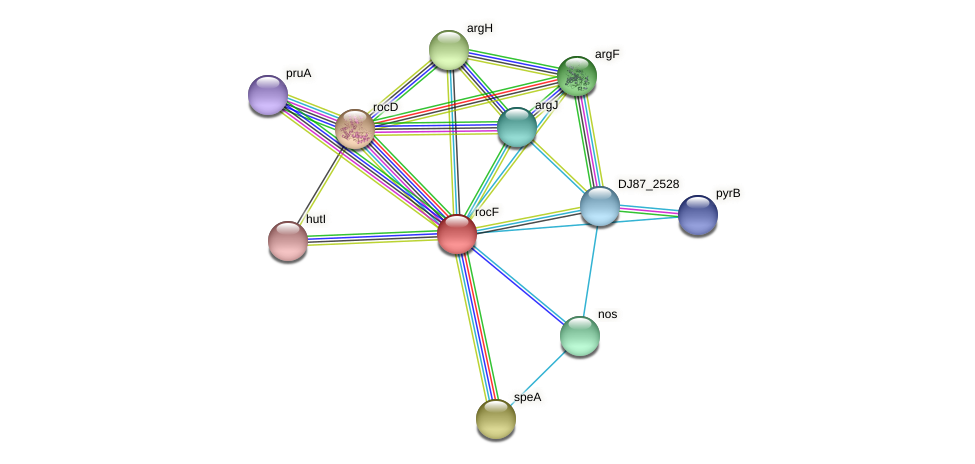 rocF protein (Bacillus cereus) - STRING interaction network
