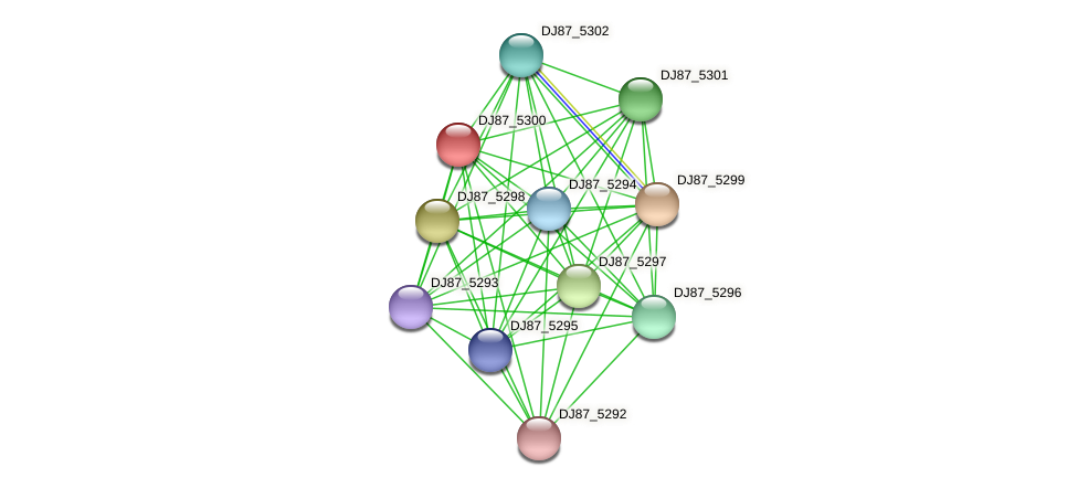 DJ87_5300 protein (Bacillus cereus) - STRING interaction network