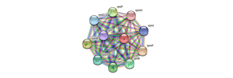 rpsI protein (Bacillus cereus) - STRING interaction network