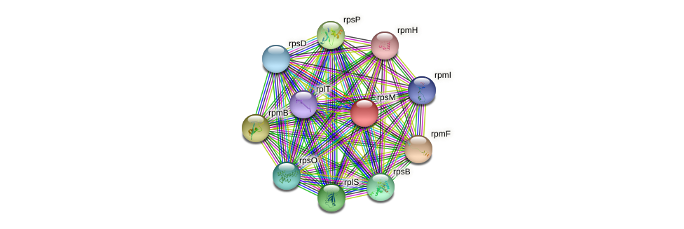 rpsM protein (Bacillus cereus) - STRING interaction network