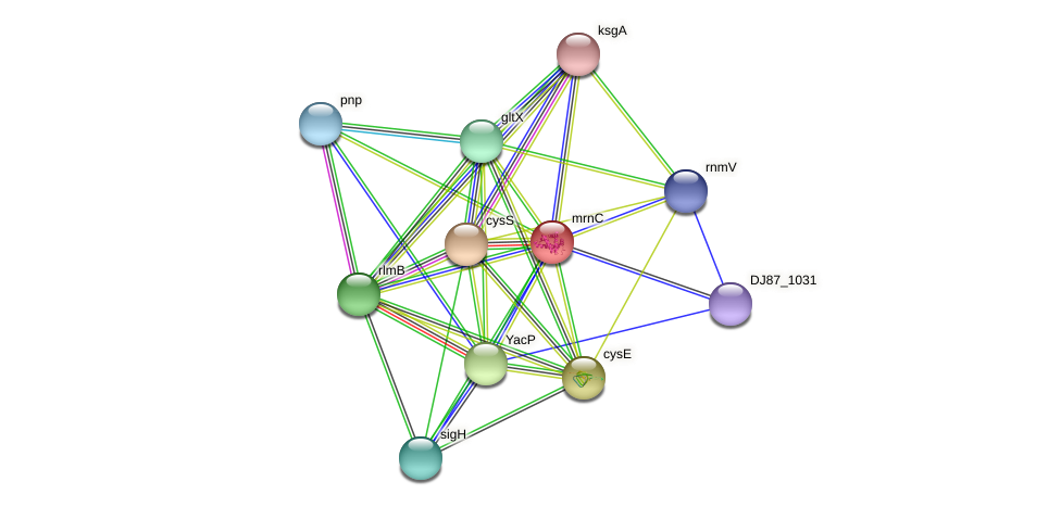 mrnC protein (Bacillus cereus) - STRING interaction network