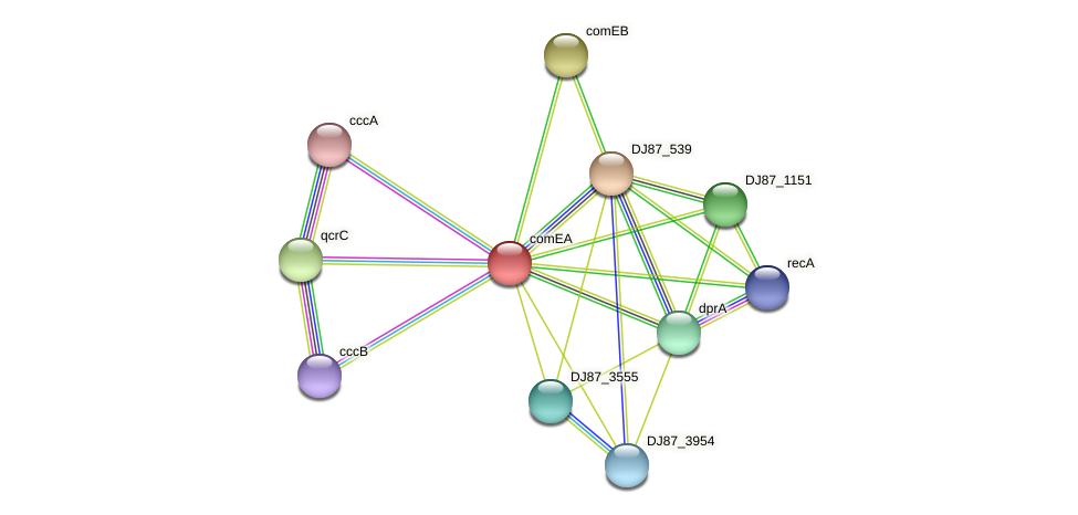 comEA protein (Bacillus cereus) - STRING interaction network