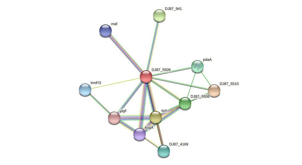 rlmCD_1 protein (Bacillus cereus) - STRING interaction network
