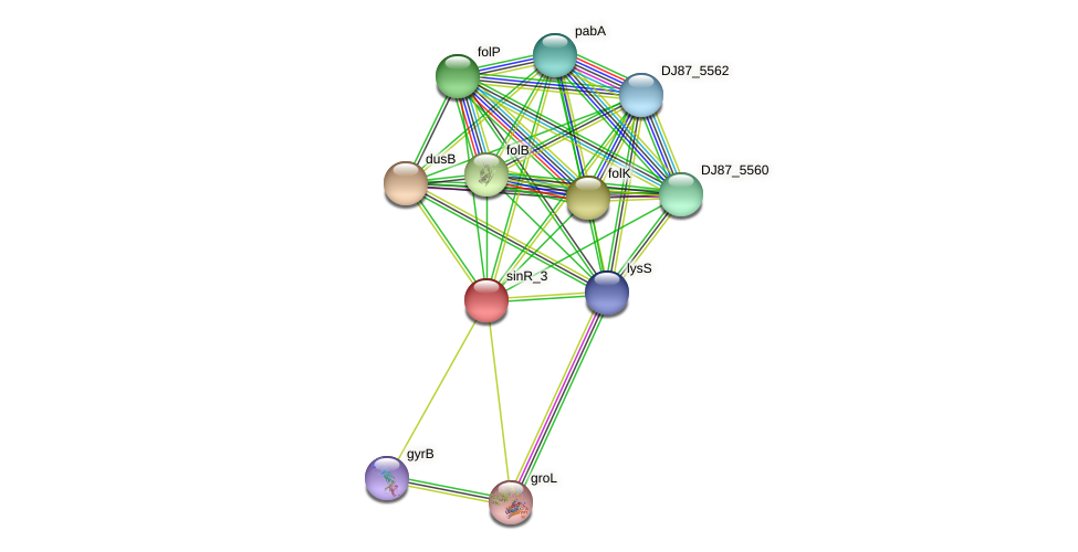 sinR_1 protein (Bacillus cereus) - STRING interaction network