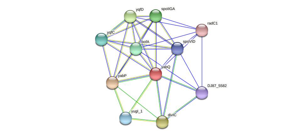 yabQ protein (Bacillus cereus) - STRING interaction network