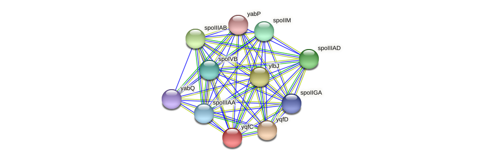 yqfC protein (Bacillus cereus) - STRING interaction network
