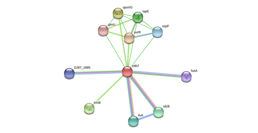 yabJ protein (Bacillus cereus) - STRING interaction network