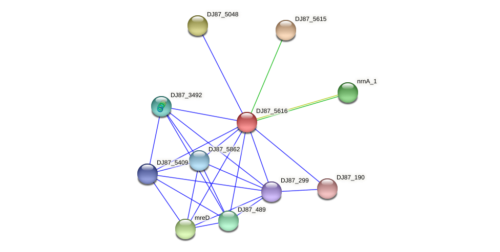 DJ87_5616 protein (Bacillus cereus) - STRING interaction network
