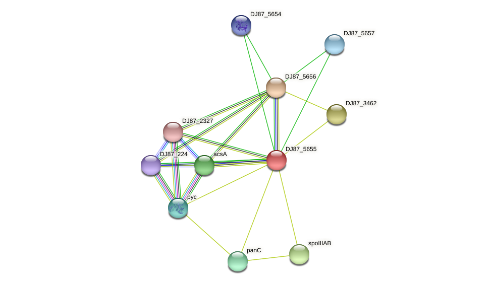 actP protein (Bacillus cereus) - STRING interaction network