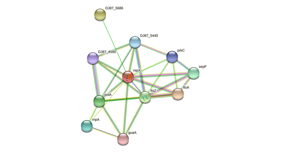repX protein (Bacillus cereus) - STRING interaction network
