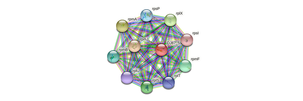rpmGA protein (Bacillus cereus) - STRING interaction network