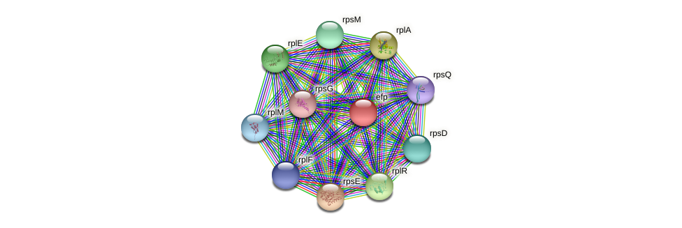 efp protein (Bacillus cereus) - STRING interaction network