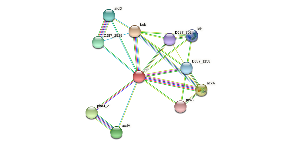ptb protein (Bacillus cereus) - STRING interaction network