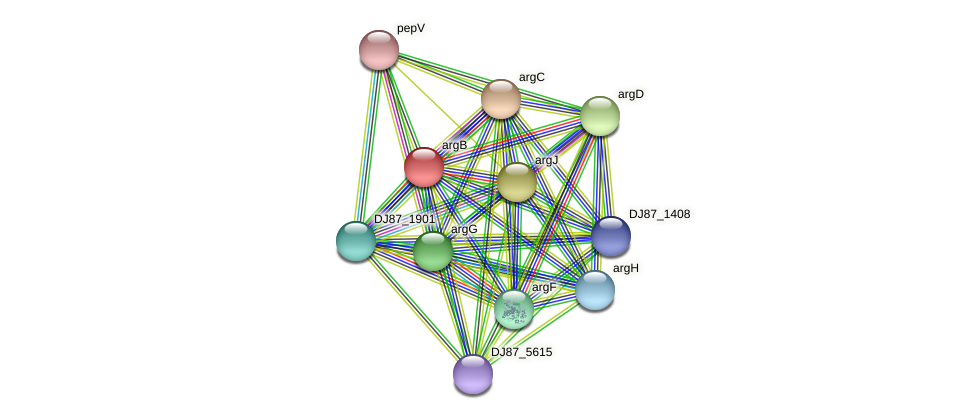 argB protein (Bacillus cereus) - STRING interaction network