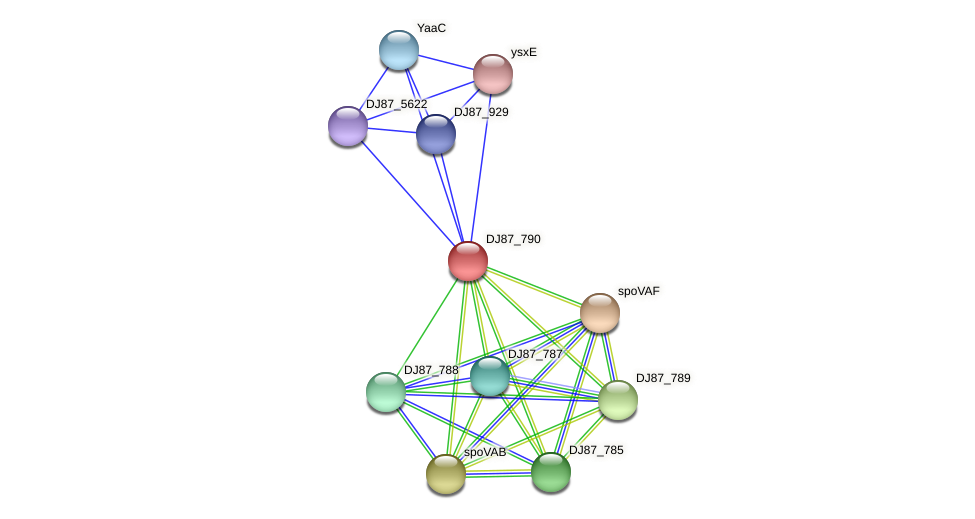 BG03_1141 protein (Bacillus cereus) - STRING interaction network