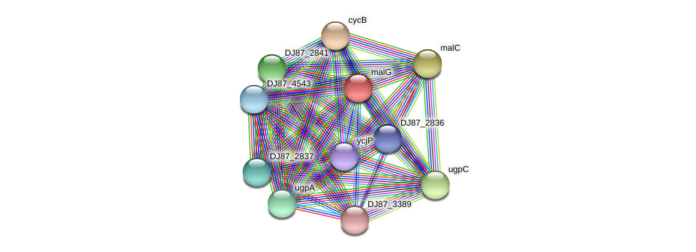 malG protein (Bacillus cereus) - STRING interaction network