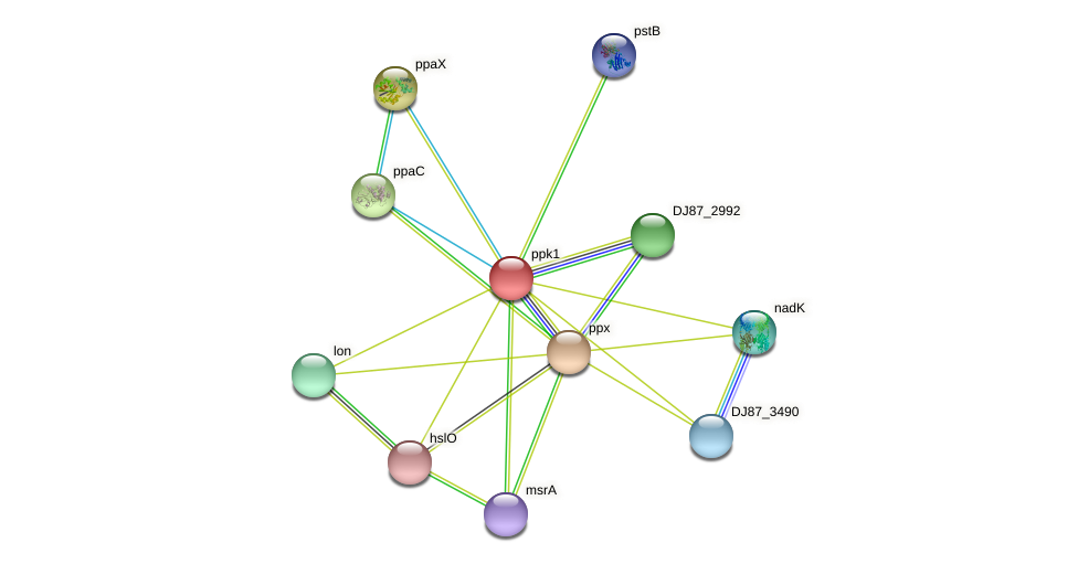 ppk1 protein (Bacillus cereus) - STRING interaction network