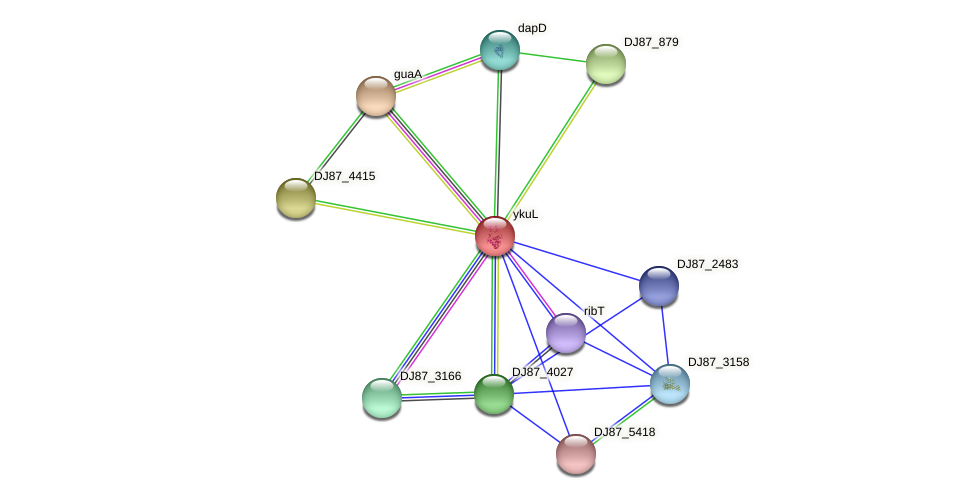 ykuL protein (Bacillus cereus) - STRING interaction network