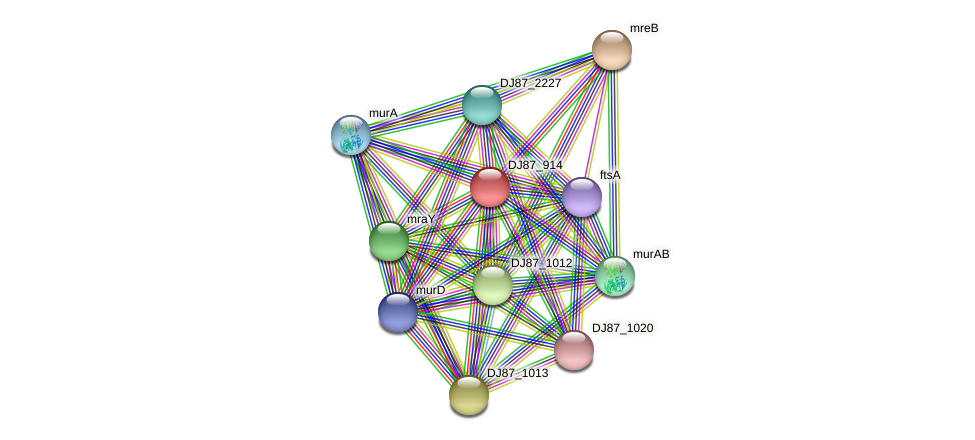 ftsW_3 protein (Bacillus cereus) - STRING interaction network