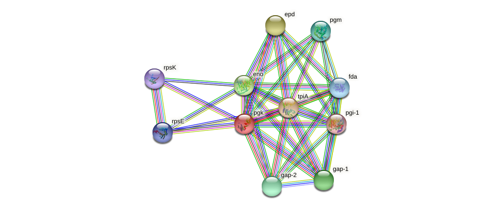 pgk protein (Pseudomonas putida KT2440) - STRING interaction network