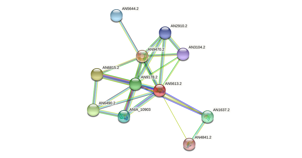 AN5613.2 protein (Emericella nidulans) - STRING interaction network