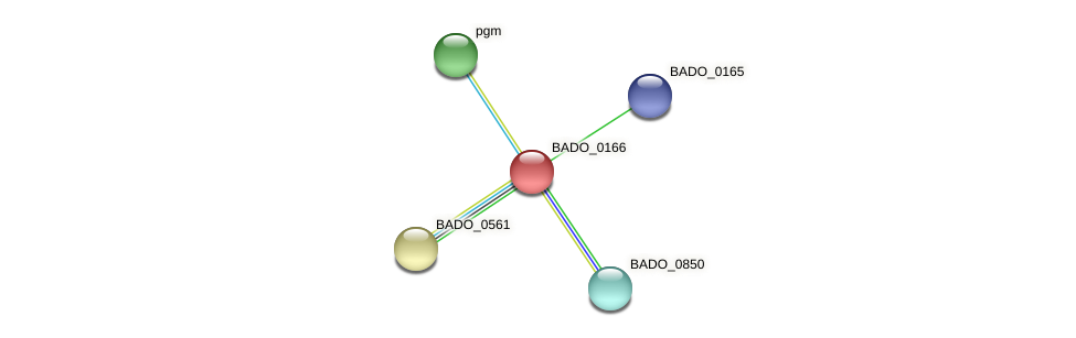 BADO_0166 protein (Bifidobacterium adolescentis) - STRING interaction network