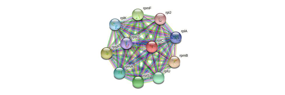 rplC protein (Bifidobacterium adolescentis) - STRING interaction network