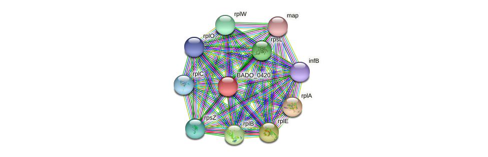 BADO_0420 protein (Bifidobacterium adolescentis) - STRING interaction network