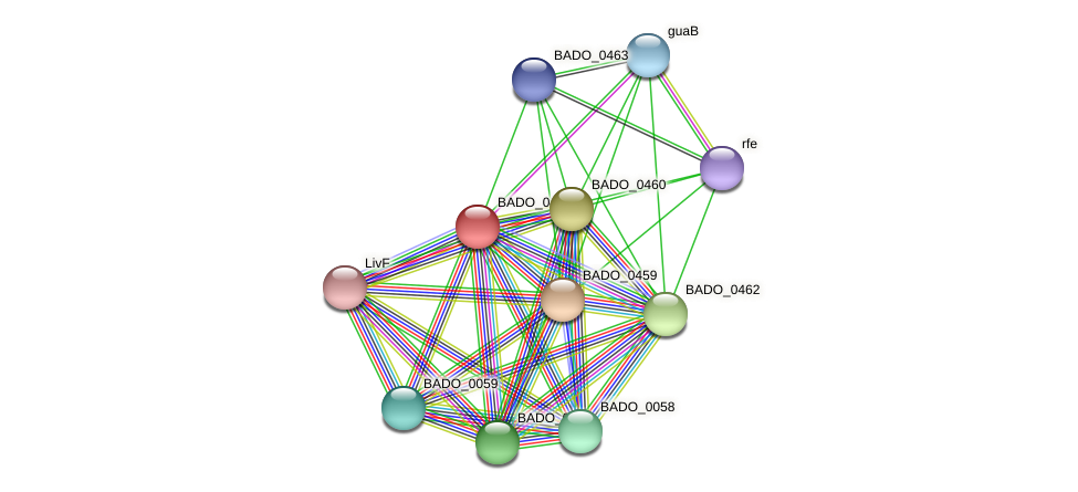 BADO_0461 protein (Bifidobacterium adolescentis) - STRING interaction network