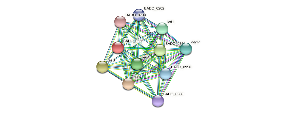 BADO_0556 protein (Bifidobacterium adolescentis) - STRING interaction network