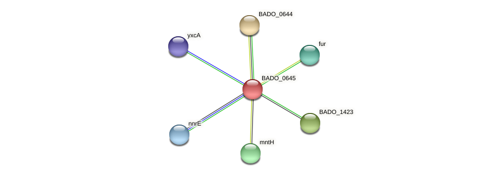 BADO_0645 protein (Bifidobacterium adolescentis) - STRING interaction network