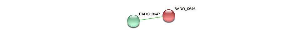 BADO_0646 protein (Bifidobacterium adolescentis) - STRING interaction network