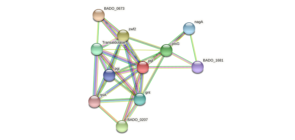 BADO_0672 protein (Bifidobacterium adolescentis) - STRING interaction network