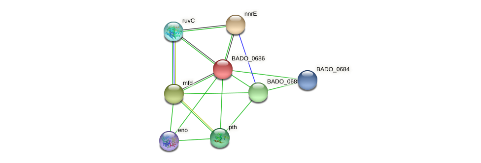BADO_0686 protein (Bifidobacterium adolescentis) - STRING interaction network