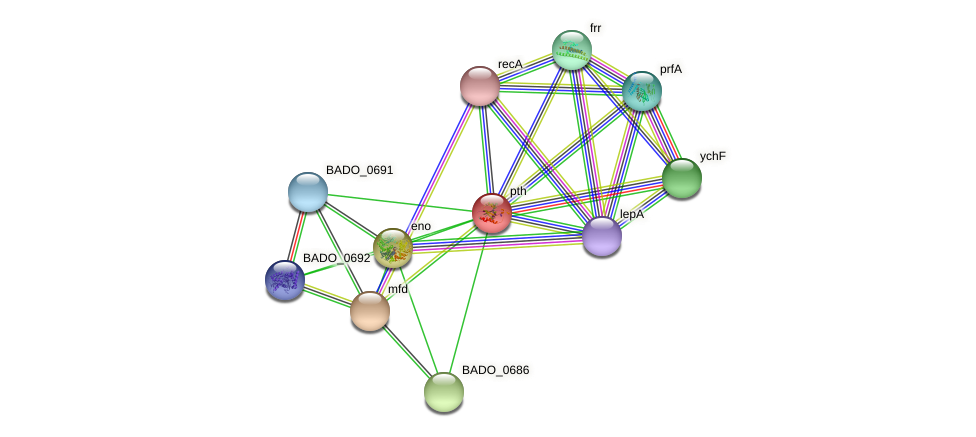 pth protein (Bifidobacterium adolescentis) - STRING interaction network