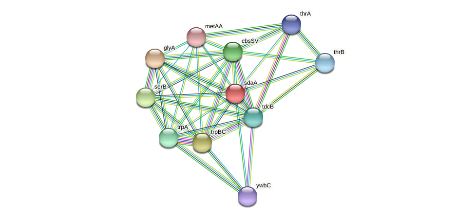 BADO_0694 protein (Bifidobacterium adolescentis) - STRING interaction network