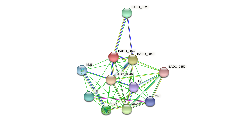 BADO_0847 protein (Bifidobacterium adolescentis) - STRING interaction network