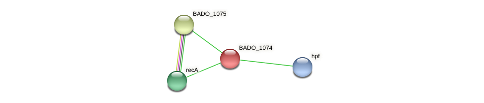BADO_1074 protein (Bifidobacterium adolescentis) - STRING interaction network