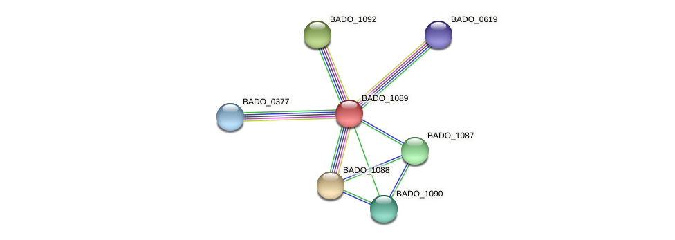 BADO_1089 protein (Bifidobacterium adolescentis) - STRING interaction network